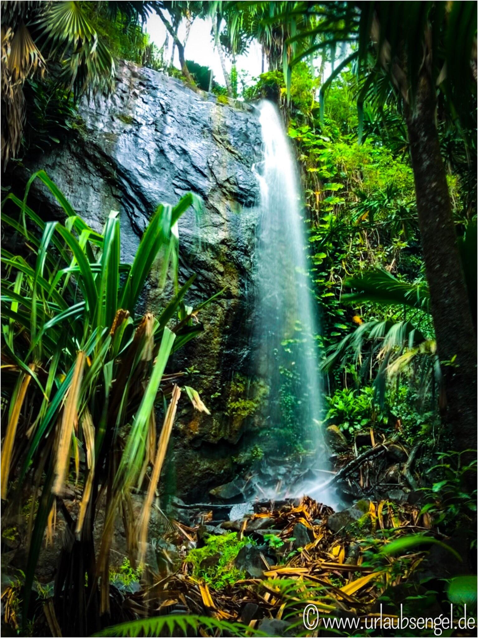 Coco de Mer auf Praslin Seychellen