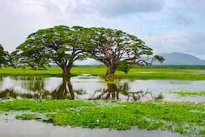 Bäume spiegeln sich im Wasser - Traumreisen Sri Lanka