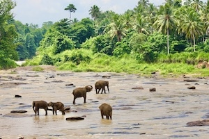 Elefantenwaisenhaus Pinnawela - Traumreisen Sri Lanka