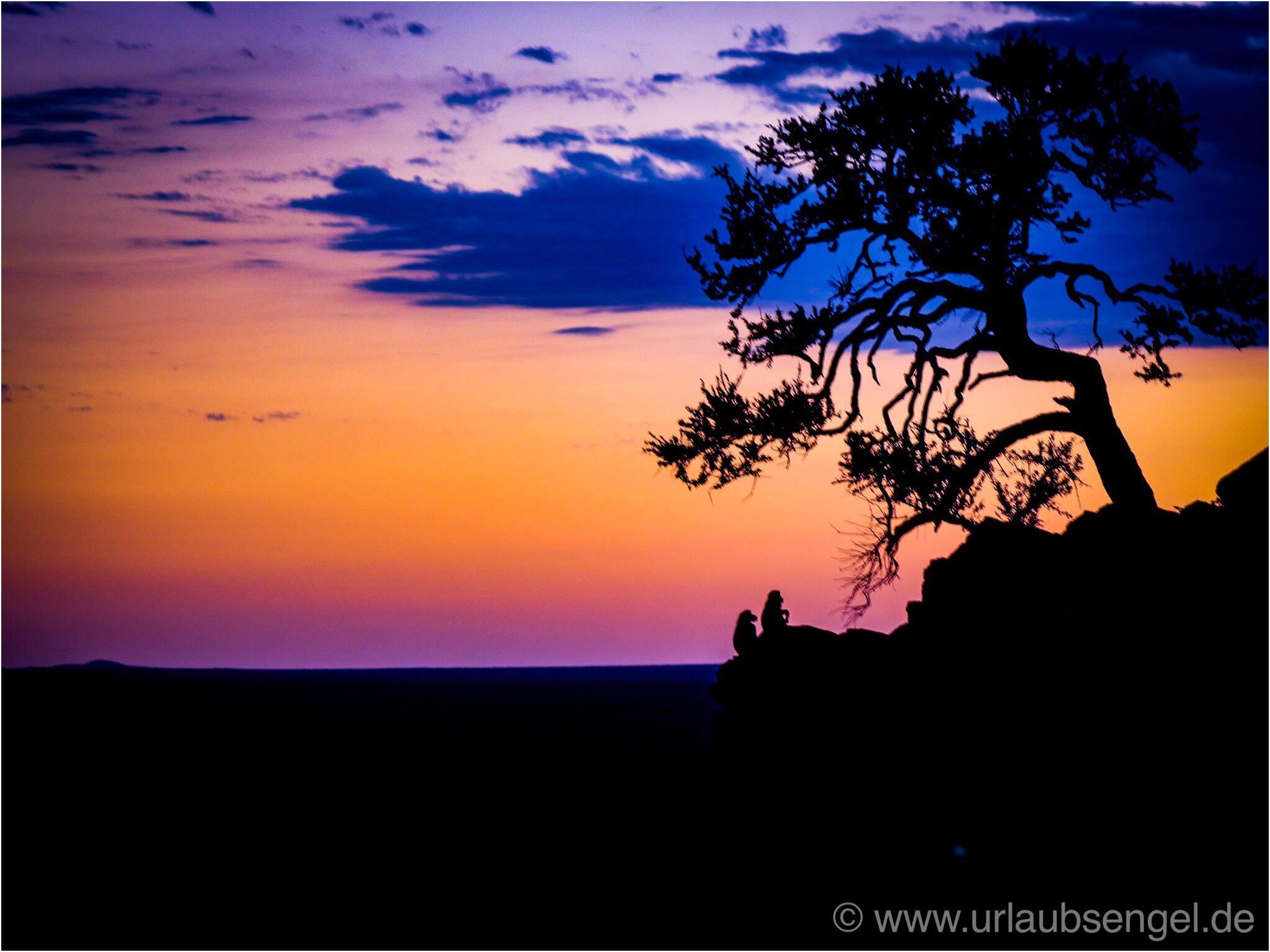 Affen im Okonjima Bush Camp - Africat Namibia