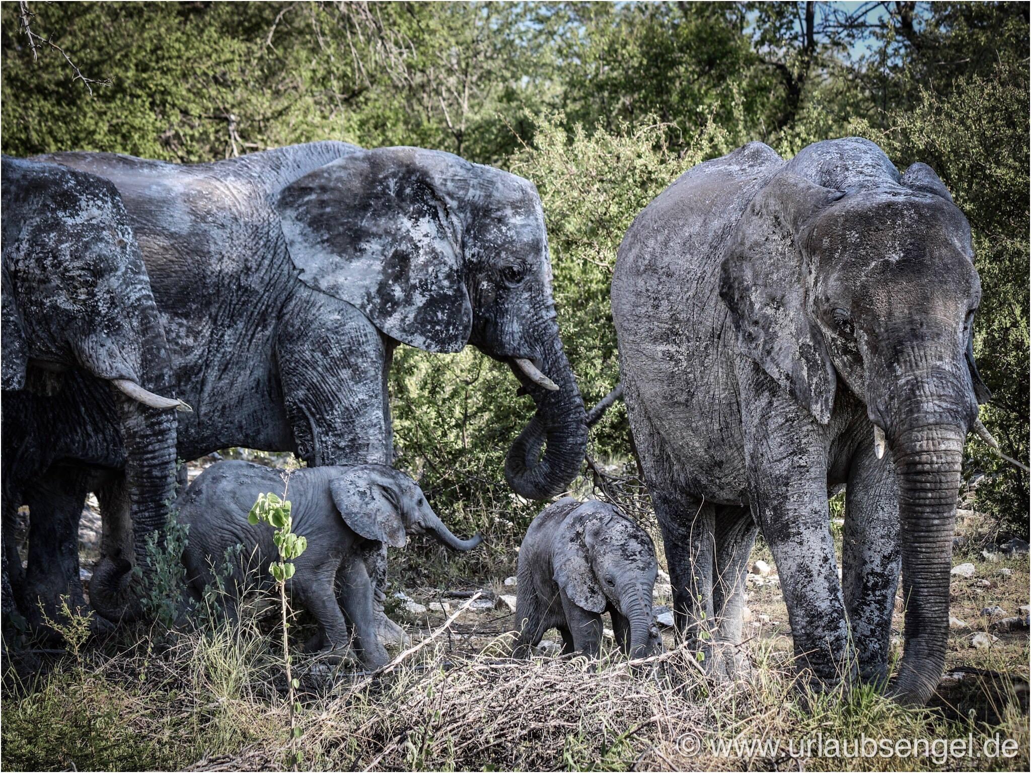 Elefanten im Etosha Nationalpark Namibia