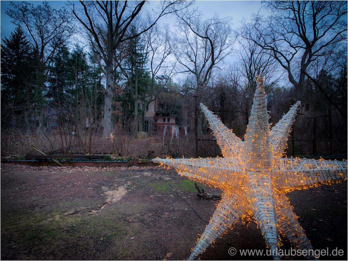Weihnachtsstern bei den Beelitz Heilstätten an Weihnachten