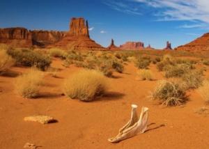 USA Reisen - Im Land der unbegrenzten Möglichkeiten mit Urlaubsengel